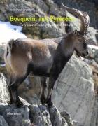 Bouquetin aux Pyrénées : odyssée d'une espèce retrouvée